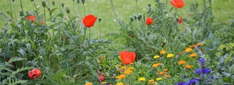 Bild zu Pflanzentauschaktion